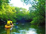 マングローブの森をすすむととても神秘的でした♪