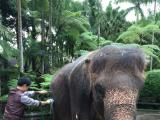 象さん洗い