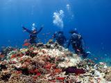 水中5mぐらいのところのサンゴ礁