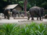 動物園でゾウのショー