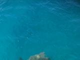 海ガメにたくさん会えました‼