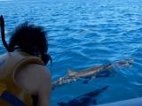 目の前をイルカが泳いでいます。