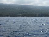 遠くて分かりづらいのですが、イルカのヒレが見えます。夢中で楽しんだのであまり写真を撮りませんでした…。