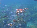 海ガメちゃん