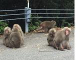 途中、道で毛づくろいをしている猿の家族に何回も会いました