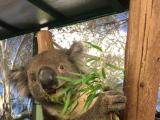 コアラと好きなだけ写真が撮れました