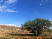 Bare earth, sparse vegetation