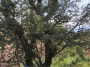 Trees near the hotel