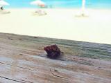 ヤドカリもいる綺麗なビーチでした