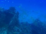 海底で撮った写真の一部です。写真よりもだいぶ迫力があります!!