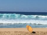 サーフィンにぴったりの波@西オアフ