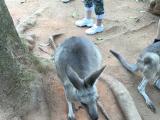 動物園でカンガルーと触れ合える