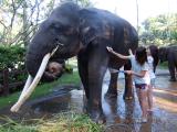 最初に体験した象洗い