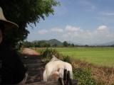 牛車にゆられて田園風景
