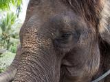 象さんの餌やり