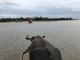水牛車にひかれ由布島へ。