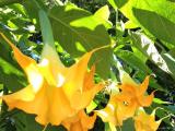 ブッチャートガーデンの花