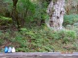 縄文杉は、優しい顔をされてました。