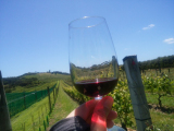 広大なブドウ畑と透き通る赤