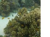 ナルスアン島のサンゴ保護区1
