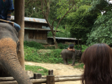 象にエサやり