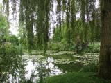 これがモネの睡蓮のモデルとなった場所です。本当に美しいです。