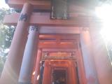 伏見稲荷大社 光がさしてとても幻想的でした。