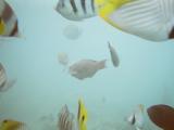 水中カメラで撮影した海の中の様子です