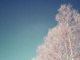 七星之木旁邊