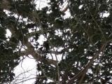 路程上見到貓頭鷹