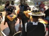 初めての象乗り体験