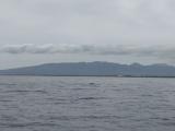 鯨の尾 スマホで撮るのは至難