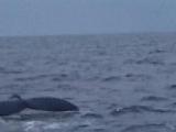 母さんクジラ
