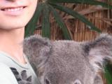 コアラかわいいです!