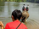 象のトレッキングで川へダイブ