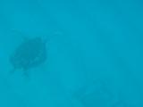 ウミガメが近づいてきてくれました♪