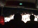 牛がたくさん!