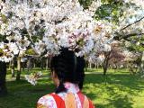 大阪城櫻花滿開