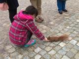 ワジェンキ公園でリスに餌を揚げました