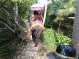 初めて象に乗りました!