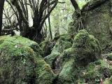 苔むす森最高