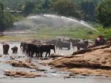 気持ちよさそうに水浴びする象たち