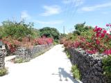竹富島の花が綺麗!