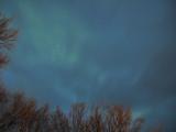 最初のポイント。目視ではわからなかった色も写真にするとしっかり緑色でした。