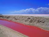 ピンクの水が脇の水路を流れていました