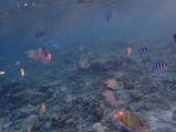 お魚がたくさん!