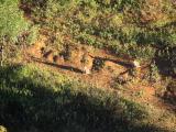 上空から見た野生のワラビー