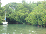 mangroves near our starting point