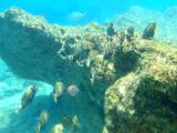 fish in Waimea Bay