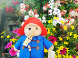 お花いっぱい!女子なら行かねば(*^^)v